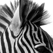 Psychology of Black and White and What They Mean for Your Business